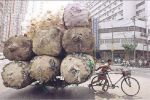 bicycle-carry-huge-weight